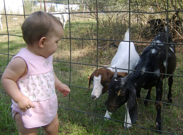 Ava and the Goats